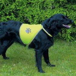 Gilet de sécurité fluo pour chien