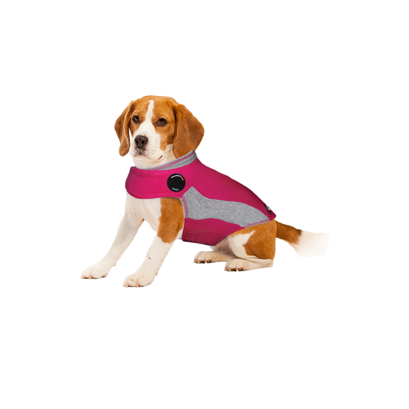 thundershirt tshirt calmant pour chien grenoble sassenage