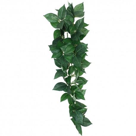 Plante Sumatra Hanging Vine