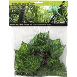 Plante Cruise Jungle Vine 2.6m
