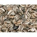 Grandes graines de tournesol 10 Kg