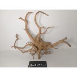 Antinea Racine vigne Extra 56 cm