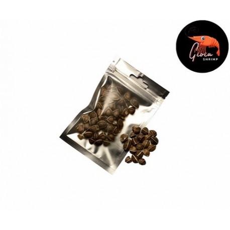 Gioiashrimp Graines de moringa X 50 pour crevettes d'aquarium