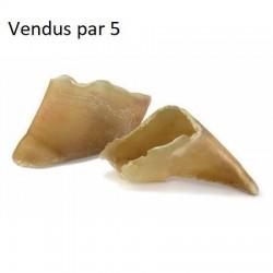 Sabots de veau par 5 France